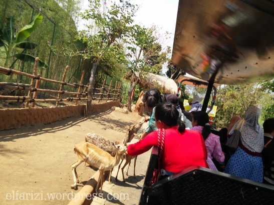 Animal Farm di Batu Secret Zoo